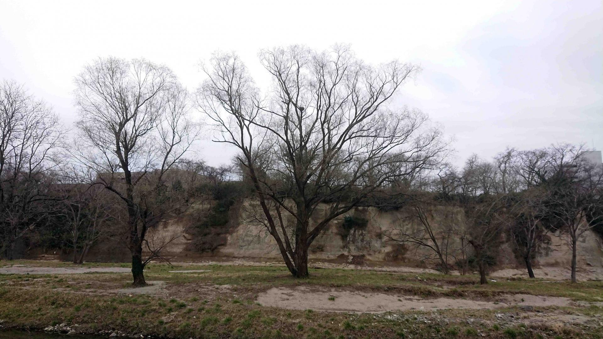 中州のカラスの巣とカラスのつがい,2020年3月14日
