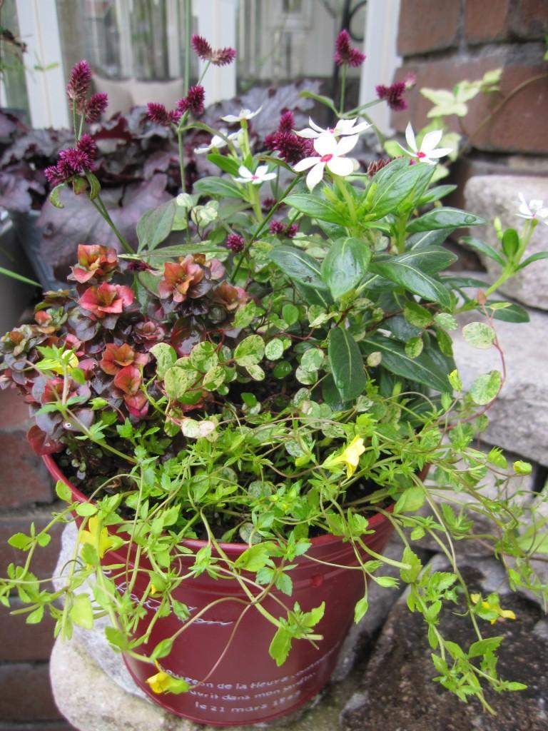 秋のミニ寄せ植え