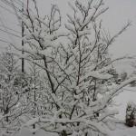 岡山 エクステリア 積雪注意