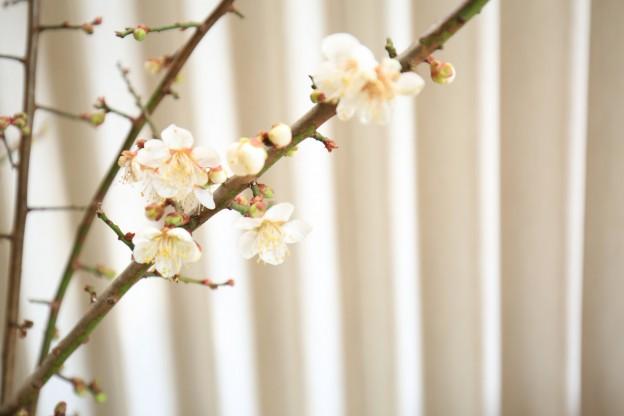 梅の花 エクステリア工房 清光園