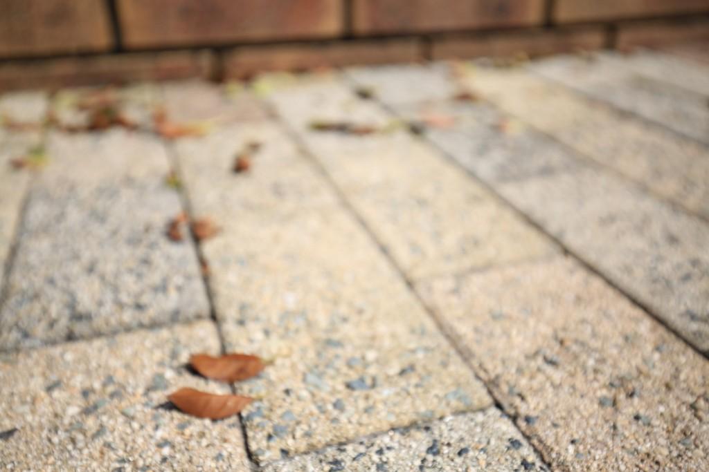 シマトネリコ 落ち葉-1