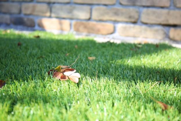シマトネリコ 落ち葉-3