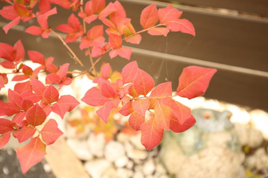 ナツハゼの葉