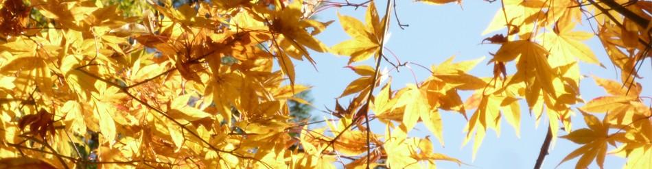 広島から剪定 剪庭園日記・超 | 広島・山口県で庭木・植木の剪定。樹木内科・外科治療 | 樹木剪定の先駆者、自然保護の覚醒者・塩田剪庭園の代表日記