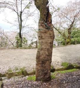 自然破壊宮島