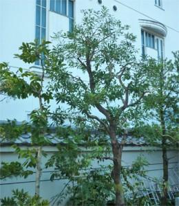 植木剪定広島