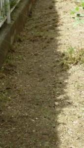 広島110草刈り