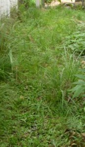 草刈り広島県