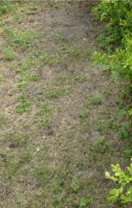 広島造園芝