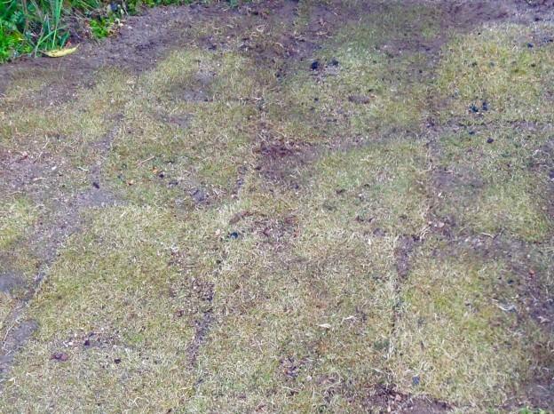 広島芝張り