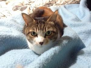 ミケ猫の沙羅ちゃん