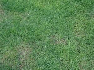 芝張り剪定広島