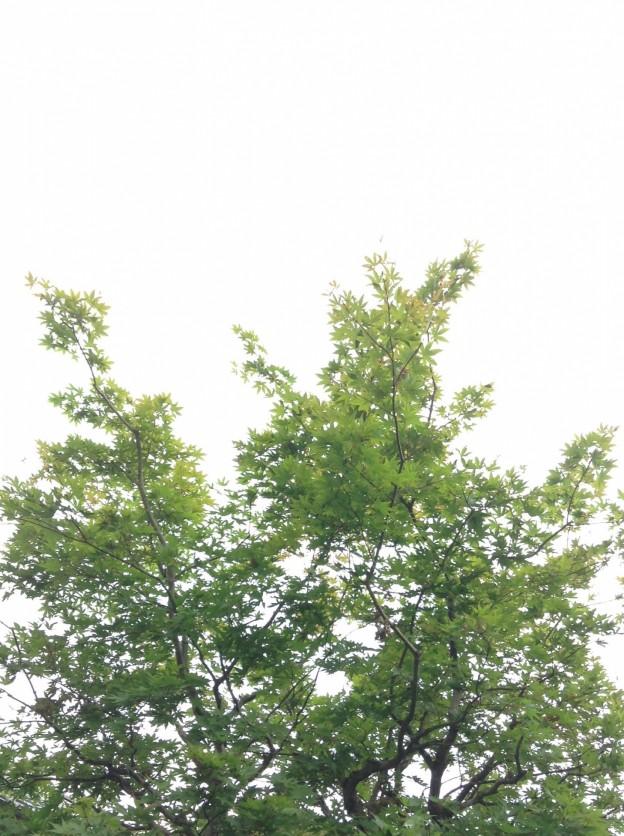 植木剪定広島山口岩国市