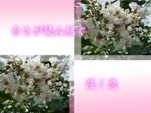 広島市で剪定は塩田剪庭園