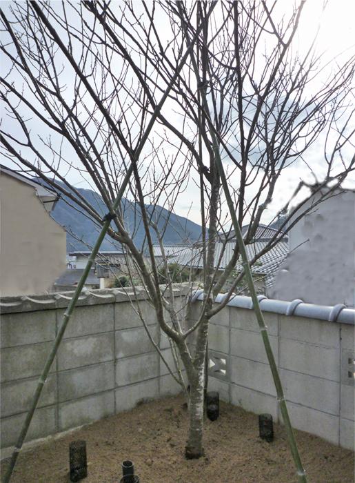 植栽広島造園井口
