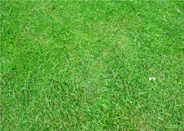 芝管理は塩田剪庭園