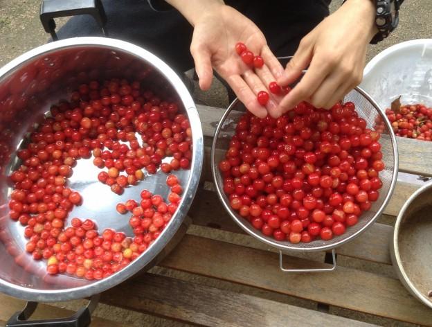 広島市西区でさくらんぼの剪定は塩田剪庭園