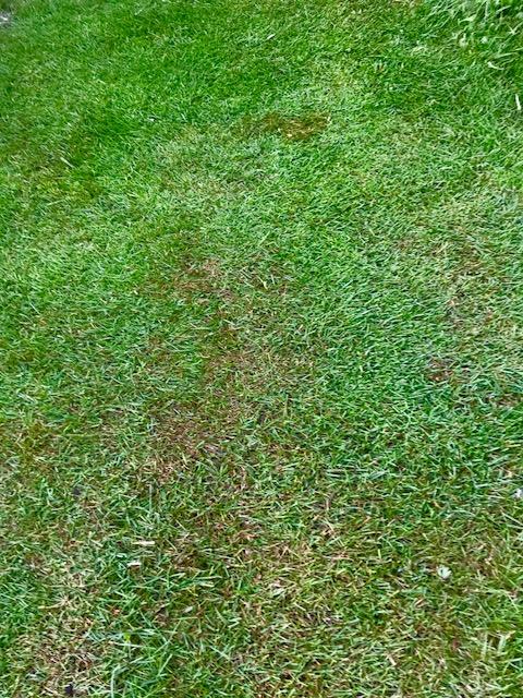 広島市西区で芝の管理は塩田剪庭園