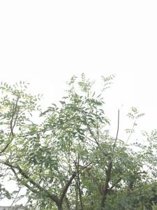 広島市西区井口で剪定は井口の造園、塩田剪庭園