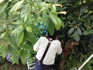 広島市西区で植木の剪定は塩田剪庭園