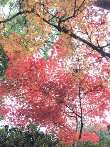 宮島桜、モミジの監視は塩田剪庭園