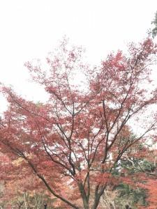 宮島モミジ、桜の監視は塩田剪庭園