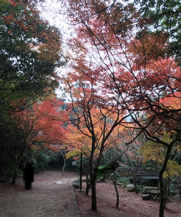 紅葉谷公園の監視は広島県代表の樹木の医者、塩田剪庭園