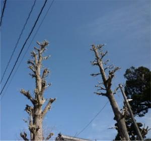 植木剪定広島。山口県岩国市、周防大島町の剪定は塩田剪庭園