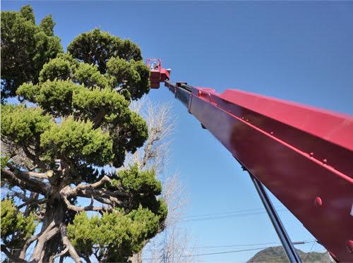 スカイマスター 22。植木剪定広島は塩田剪庭園