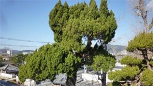 植木剪定広島県