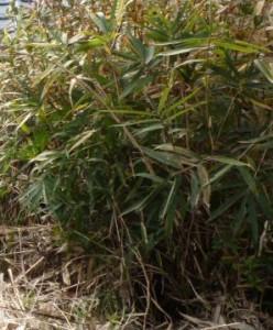 広島市西区の草刈り塩田剪庭園