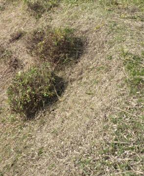 広島市安佐南区の草刈り塩田剪庭園