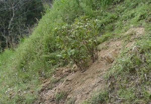 山口県岩国市で植栽は塩田剪庭園