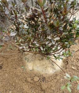 広島市佐伯区で植栽は塩田剪庭園