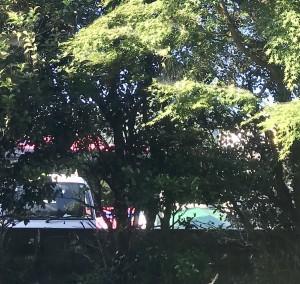 広島県廿日市市津田、4771 津田、交通、無断で剪定