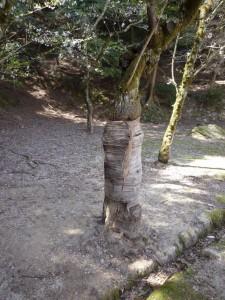 樹木の医者、広島県代表の塩田剪庭園