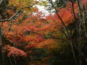 広島県廿日市市宮島での樹木診断は塩田剪庭園