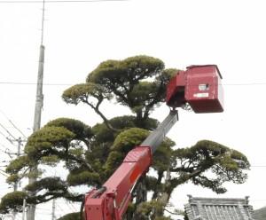 広島市で植木屋は塩田剪庭園