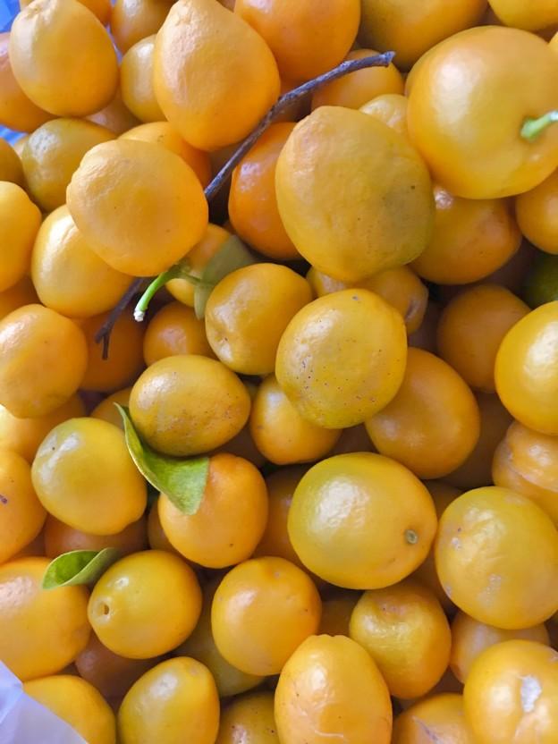 金柑や柚子の剪定、植え付け作業は塩田剪庭園