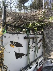 広島市で植木剪定は塩田剪庭園