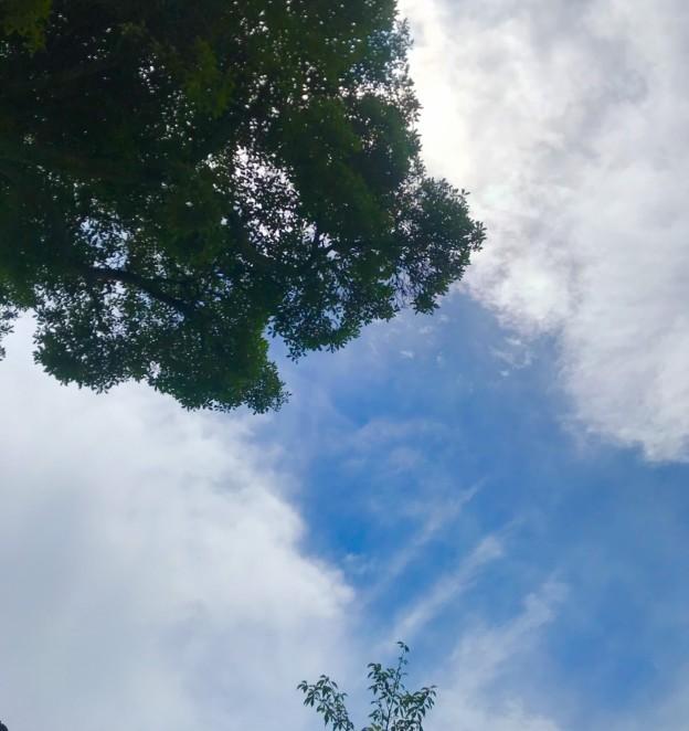 山口県岩国市や周防大島で植木の剪定は塩田剪庭園
