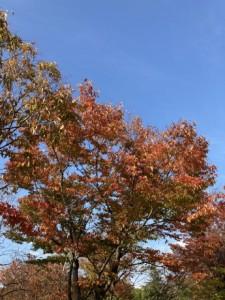 紅葉する樹木の剪定は塩田剪庭園にご依頼ください