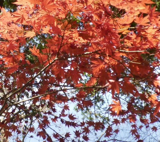 広島県の剪定は樹木内科・外科医、樹木剪定士の塩田剪庭園