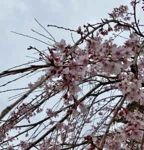 広島県で植木屋は塩田剪庭園