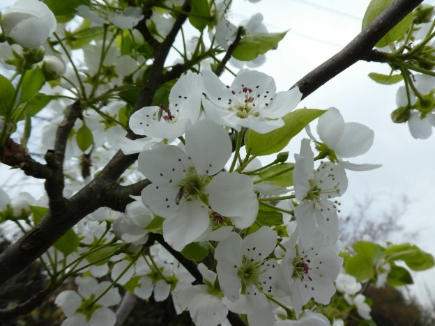 広島県で植木の剪定は塩田剪庭園