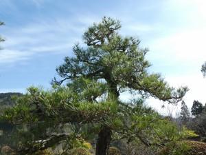 広島県で植木剪定は塩田剪庭園