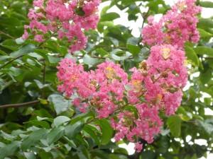 広島市で植木屋は樹木内科・外科医の塩田剪庭園