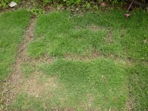 広島市で芝の管理は塩田剪庭園