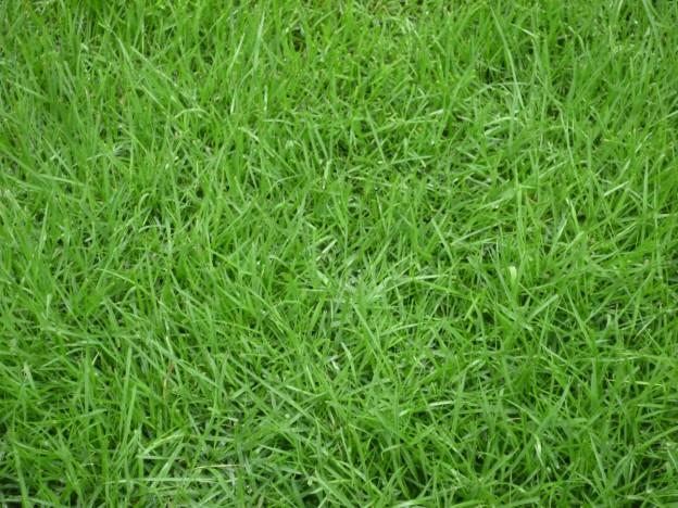 広島市佐伯区で芝張りは塩田剪庭園