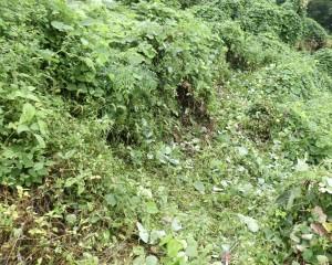 広島市西区で草刈りは塩田剪庭園